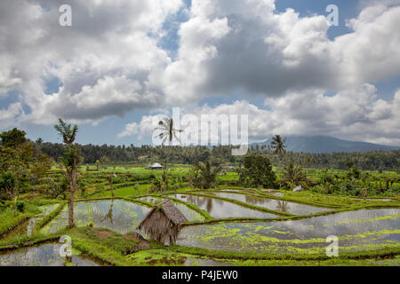 Bali Rice Terraces. The beautiful and dramatic rice fields. A truly inspirational landscape. - Stock Photo
