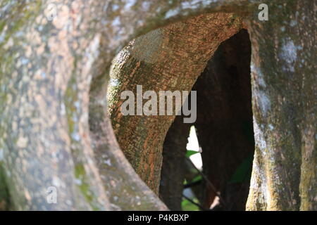 Tree Cave inside the Seethawaka Botanical Garden, Sri Lanka - Stock Photo