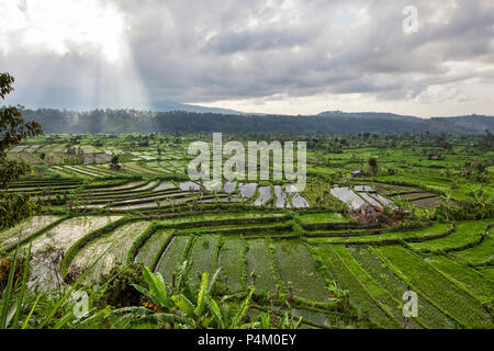 Rice terraces in rice fields on mountain of twilight - Stock Photo