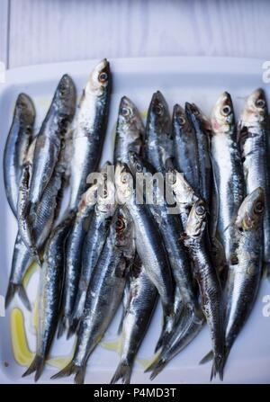 Anchovies with olive oil - Stock Photo