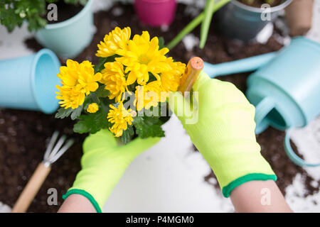 Photo on top of person's hands in gloves transplanting flower - Stock Photo