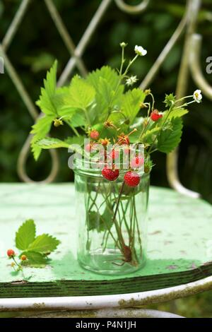 Sprigs of wild strawberries in a glass on a garden bench - Stock Photo