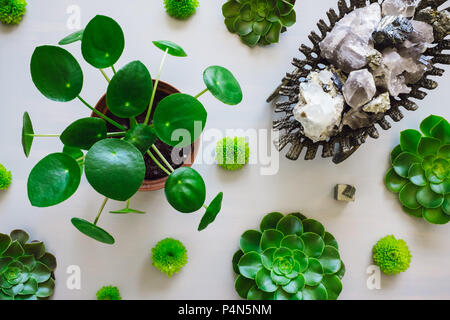 Pilea Plant, Succulents and Chrysanthemums Arranged with Antique Vessel Containing Quarts, Flourite, Black Tourmaline, Pyrite and Mica - Stock Photo