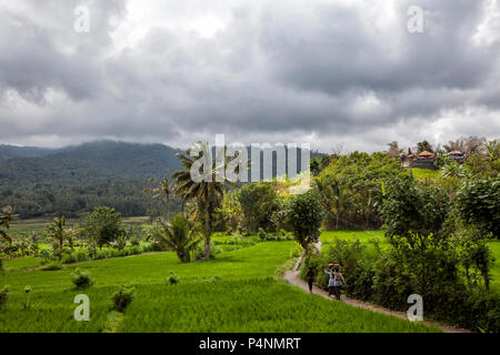 Women walking home between green rice fields on Bali island - Stock Photo