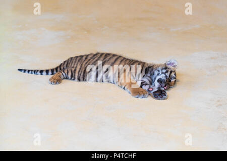 Cute baby tiger sleeping on the park. - Stock Photo