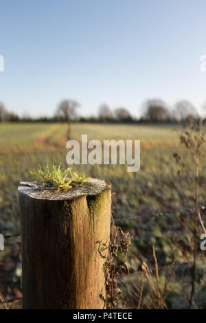 Fence post leading into field early morning Frost, Devon, England, UK. - Stock Photo