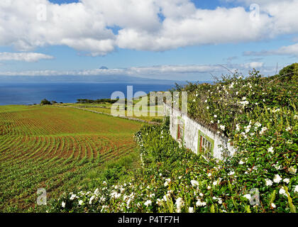 View from the Azores island Sao Jorge to Pico, in the foreground a house overgrown with flowers, over fields and hills the view goes to the volcanic m - Stock Photo