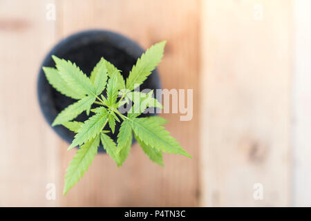 cannabis plant  with wooden background. - Stock Photo