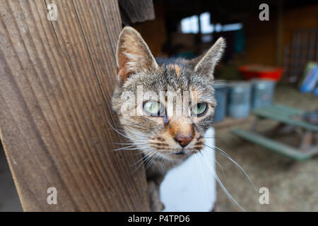 Old Cat Face - Stock Photo