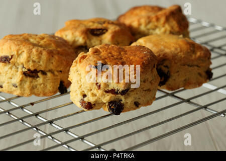 Freshly cooked fruit scones on a cooling rack with a grey wood background