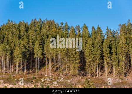 Blackforest close to Titisee in Germany - Stock Photo