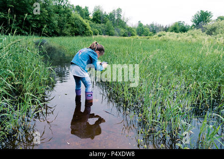 A girl takes pictures of a frog that hides in a thicket of grass on a swamp - Stock Photo