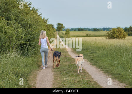 Young blond woman walking away from the camera with her two dogs along a farm track through agricultural fields - Stock Photo
