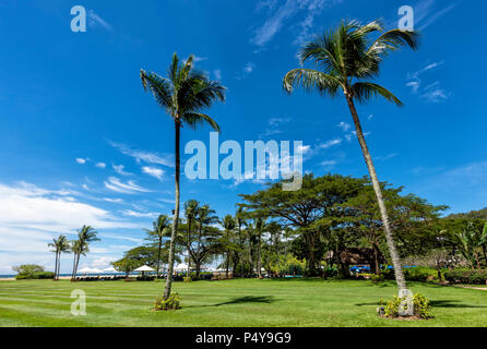 Palm trees against a blue sky in Kota Kinabalu on Borneo, Malaysia - Stock Photo