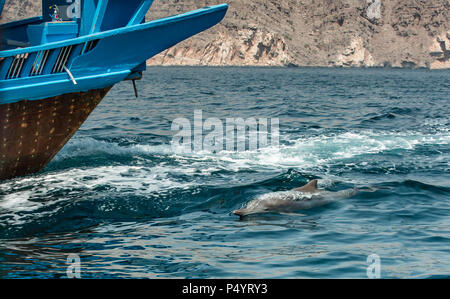 dolphins in a coastal waters of Musandam - Stock Photo