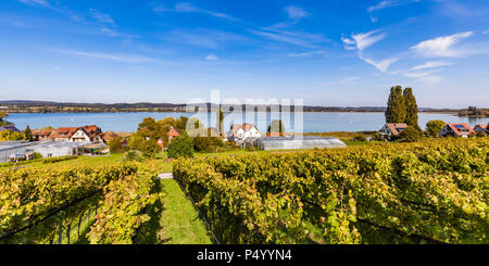 Germany, Oberzell, view to Lake Constance with vineyards in the foreground - Stock Photo