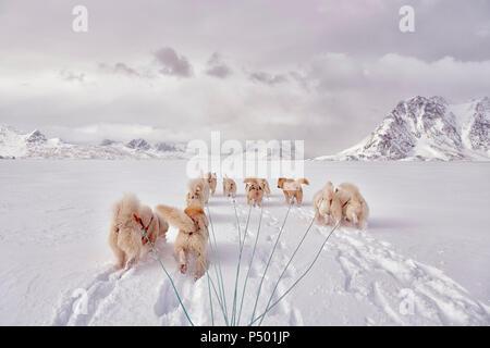 greenland, Schweizerland Alps, huskies - Stock Photo