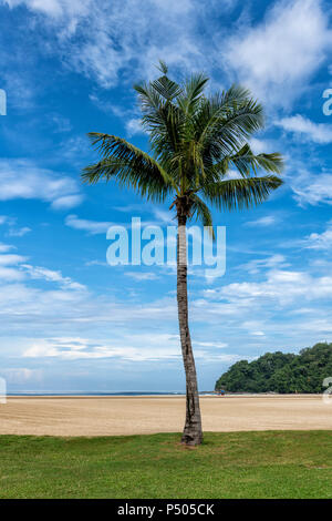 Palm tree on the beach near Kota Kinabalu in Sabah, Borneo, Malaysia - Stock Photo