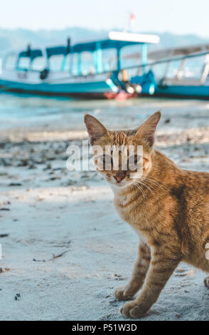 Yellow Cat - Stock Photo