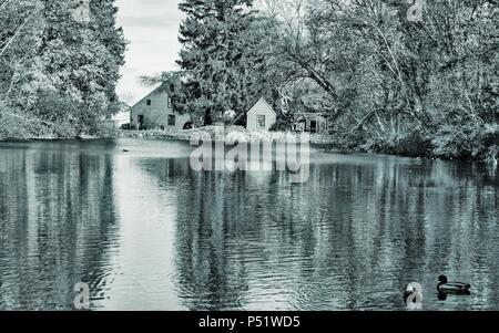 Autumn view of a tranquil pond with ducks. - Stock Photo