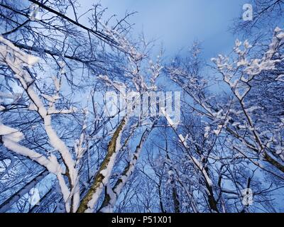 Branches of trees are covered with fresh  snow in a mysterious forest. The evening an exciting cold season - Stock Photo
