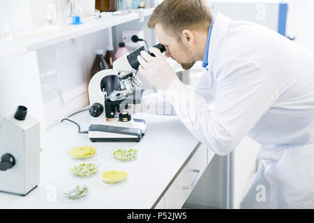 Male scientist studying green vegetables under microscope - Stock Photo