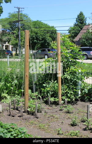 Summer fun community gardening at the historic Wagner Farm in suburban Glenview, Illinois. - Stock Photo