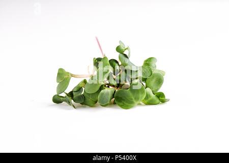 microgreen daikon twigs isolated on white background - Stock Photo