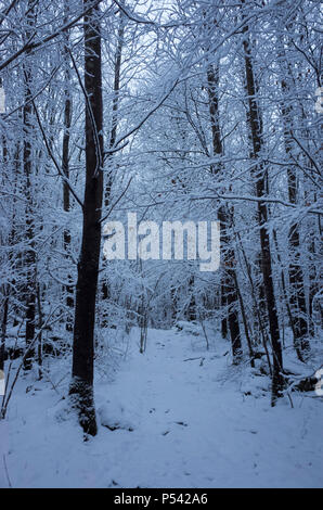 Beautiful nature and landscape photo of blue dusk evening in Katrineholm Sweden Scandinavia. Nice, cold winter at christmas time. Forest - Stock Photo