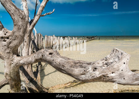 Floater driftwood on a white sand beach in Gulf of Mexico in Holbox - Stock Photo