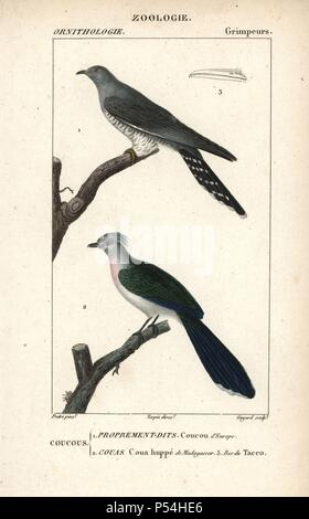 Common cuckoo, Cuculus canorus, and crested coua, Coua cristata. Handcoloured copperplate stipple engraving from Dumont de Sainte-Croix's 'Dictionary of Natural Science: Ornithology,' Paris, France, 1816-1830. Illustration by J. G. Pretre, engraved by Guyard, directed by Pierre Jean-Francois Turpin, and published by F.G. Levrault. Jean Gabriel Pretre (17801845) was painter of natural history at Empress Josephine's zoo and later became artist to the Museum of Natural History. Turpin (1775-1840) is considered one of the greatest French botanical illustrators of the 19th century. - Stock Photo