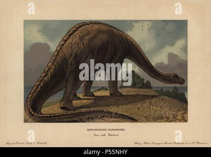 Diplodocus carnegii, extinct genus of diplodocid sauropod dinosaur from the Jurassic. Colour printed (chromolithograph) illustration by F. John from 'Tiere der Urwelt' Animals of the Prehistoric World, 1910, Hamburg. From a series of prehistoric creature cards published by the Reichardt Cocoa company. - Stock Photo