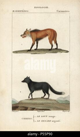Red wolf, Canis lupus rufus (critically endangered), and silver fox, Vulpes vulpes. Handcoloured copperplate stipple engraving from Frederic Cuvier's 'Dictionary of Natural Science: Mammals,' Paris, France, 1816. Illustration by J. G. Pretre, engraved by Nargeot, directed by Pierre Jean-Francois Turpin, and published by F.G. Levrault. Jean Gabriel Pretre (17801845) was painter of natural history at Empress Josephine's zoo and later became artist to the Museum of Natural History. Turpin (1775-1840) is considered one of the greatest French botanical illustrators of the 19th century. - Stock Photo