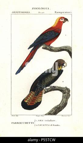 Extinct Cuban red macaw, Ara tricolor, and red-tailed black cockatoo, Calyptorhynchus banksii. Handcoloured copperplate stipple engraving from Antoine Jussieu's 'Dictionary of Natural Science,' Florence, Italy, 1837. Illustration by J. G. Pretre, engraved by Terreni, directed by Pierre Jean-Francois Turpin, and published by Batelli e Figli. Jean Gabriel Pretre (17801845) was painter of natural history at Empress Josephine's zoo and later became artist to the Museum of Natural History. Turpin (1775-1840) is considered one of the greatest French botanical illustrators of the 19th century. - Stock Photo