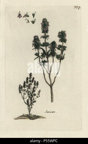 Summer savory, Satureja hortensis. Handcoloured botanical drawn and engraved by Pierre Bulliard from his own 'Flora Parisiensis,' 1776, Paris, P. F. Didot. Pierre Bulliard (1752-1793) was a famous French botanist who pioneered the three-colour-plate printing technique. His introduction to the flowers of Paris included 640 plants. - Stock Photo