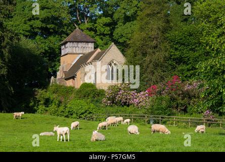 Sheep grazing near St James' Church, Shipton, Shropshire. - Stock Photo