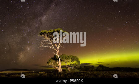 Green auroral arc and Milky Way behind gum tree - Stock Photo