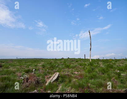 After some Tree Felling Operations, the top of Carrot Hill begins to return to Nature, slowly smoothing out the destructive capacity of Tree Felling.  - Stock Photo