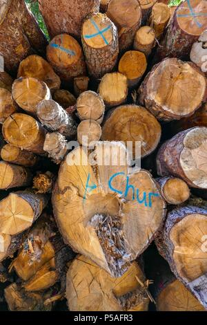 Cut sawn logs piled up in wood yard at Chur, Switzerland - Stock Photo