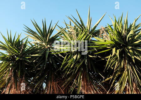 Cactus in the morning sun on the Costa Blanca, Spain - Stock Photo