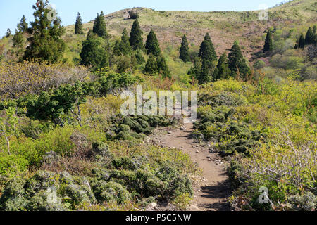 Dirt path winds up through green trees near peak of Mt. Bunagatake in Shiga Prefecture - Stock Photo
