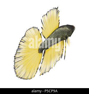 Betta Fish on a white. 3D illustration - Stock Photo