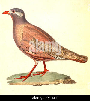 N/A.  English: « Perdix heyi » = Ammoperdix heyi (Sand Partridge) - male Français: « Perdix heyi » = Ammoperdix heyi (Perdrix de Hey) - mâle . 1838.   Nicolas Huet  (1770–1830)    Alternative names Nicolas, II Huet; Nicolas Huet The Younger; Nicholas Huet II; Nicolas The Younger Huet  Description French painter, illustrator and engraver  Date of birth/death 1770 26 December 1830  Location of birth Paris  Authority control  : Q3340421 VIAF:95590486 ISNI:0000 0000 7064 7628 ULAN:500117124 GND:138988412      Jean Gabriel Prêtre  (1768–1849)    Description Swiss artist  Date of birth/death 20 Dece - Stock Photo