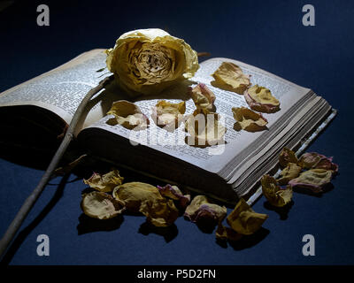 Withered rose placed on the cover of an old open book, with rose petals scattered around - Stock Photo