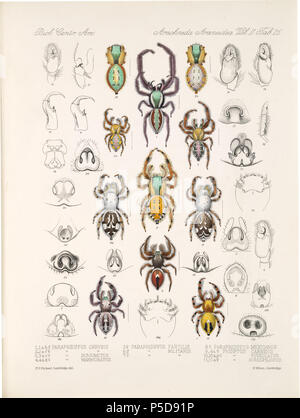N/A. English: Zoological illustrations of spiders made by Frederick O. Picard-Cambridge for the Biologia Centrali-Americana, an encyclopedia of the natural history of Mexico and Central America . between 1897 and 1905. Frederick Octavius Pickard-Cambridge 116 Arachnida Araneidea Vol 2 Table 26 - Stock Photo