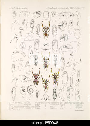 N/A. English: Zoological illustrations of spiders made by Frederick O. Picard-Cambridge for the Biologia Centrali-Americana, an encyclopedia of the natural history of Mexico and Central America . between 1897 and 1905. Frederick Octavius Pickard-Cambridge 116 Arachnida Araneidea Vol 2 Table 23 - Stock Photo