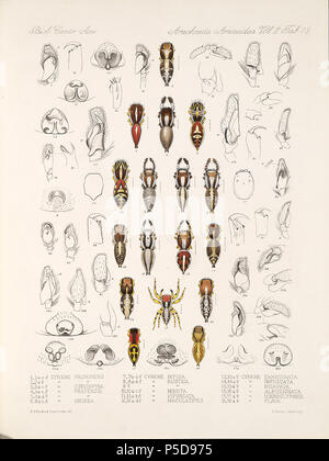 N/A. English: Zoological illustrations of spiders made by Frederick O. Picard-Cambridge for the Biologia Centrali-Americana, an encyclopedia of the natural history of Mexico and Central America . between 1897 and 1905. Frederick Octavius Pickard-Cambridge 116 Arachnida Araneidea Vol 2 Table 19 - Stock Photo
