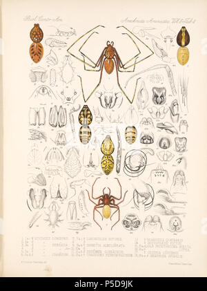 N/A. English: Zoological illustrations of spiders made by Frederick O. Picard-Cambridge for the Biologia Centrali-Americana, an encyclopedia of the natural history of Mexico and Central America . between 1897 and 1905. Frederick Octavius Pickard-Cambridge 116 Arachnida Araneidea Vol 2 Table 4 - Stock Photo