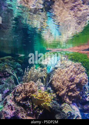 aquarium fish view - Stock Photo