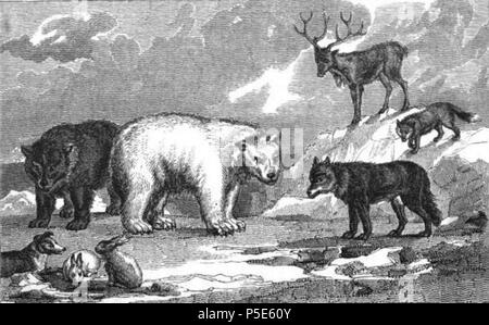 N/A. English: Illustration of arctic animals from Narrative of Discovery and Adventure in the Polar Regions (1830), by Sir John Lesley, Robert Jameson, and Hugh Murray. 1830. Unknown engraver 121 Arctic animals Polar regions - Stock Photo